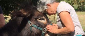 Atelier découverte de l'âne, pour tous, cycle de 5 ateliers Saint-Lumine-de-Coutais
