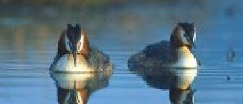 Observation des oiseaux de l'étang de Clégreuc Le Gâvre