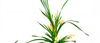 Art floral japonais Ikebana, exposition Lorient