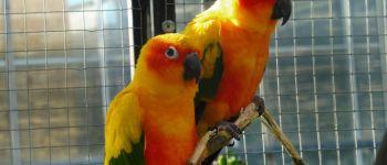 Exposition, bourse aux oiseaux à la cactuseraie de Creisméas Guipavas