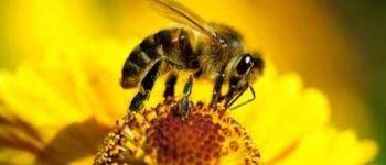 Sauvons les abeilles Sixt-sur-Aff