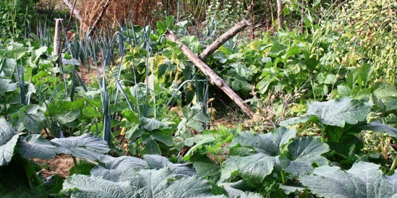 Stage : La permaculture au jardin, journée découverte.