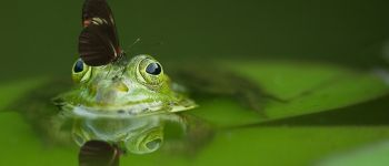 Balade nature - La Nature se raconte Paimpont