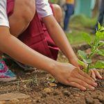 Journée plantation Iffendic