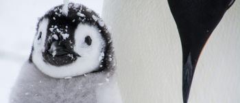 Exposition - Le temps d\un Blizzard Fouesnant