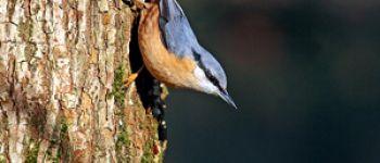 Comptage des oiseaux de jardin Carantec