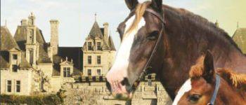 Concours départemental d\attelages du cheval breton Saint-vougay