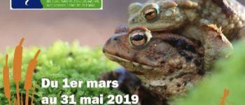 Fréquence grenouille : Partez à la découverte des amphibiens du Trégor Louannec
