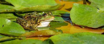 Sortie Amphibiens Saint-Lunaire