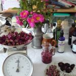 Atelier herboristerie Morlaix