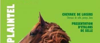 Foire de Printemps - Marché aux chevaux Plaintel
