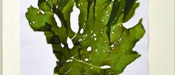 Sortie algues Kerlouan