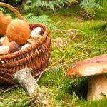 Sortie champignons Plédéliac