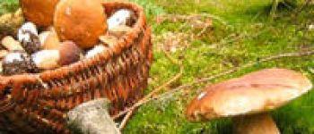 Rando\ pédagogique : à la découverte des champignons Plédéliac