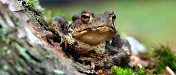 Vous avez dit amphibien ? : balade nature Hanvec