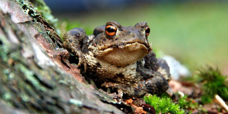 Vous avez dit amphibien ? : balade nature