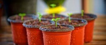 Troc plantes Laurenan