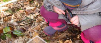 Le petit peuple des feuilles Plourivo