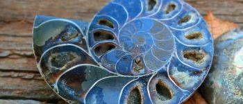 Expo-vente : Minéraux, fossiles, bijoux, déco Plougasnou