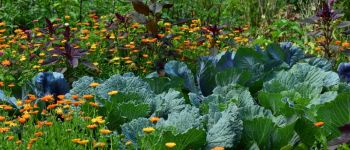 Animation \Comment entretenir son jardin sans pesticides ?\ Maël-Carhaix