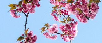 Printemps des fleurs Plobannalec-Lesconil