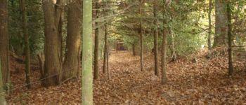 Enquête nature en forêt Plédéliac