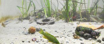 Nourrissage des animaux de l'aquarium Plouguerneau
