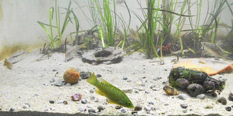 Nourrissage des animaux de l'aquarium