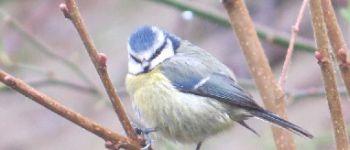 Comptage des oiseaux des jardins La Chapelle-Neuve