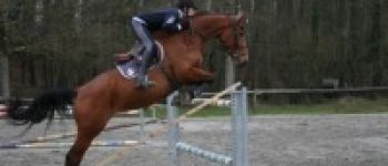 Concours de saut d\obstacles Lamballe