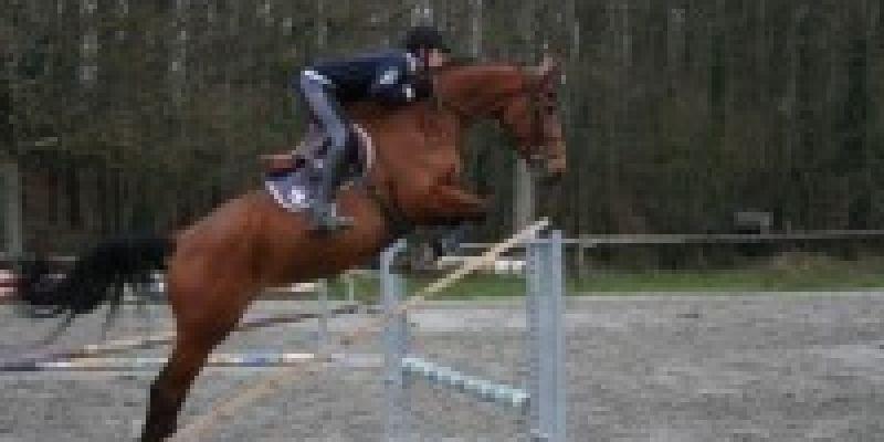 Concours de saut dobstacles