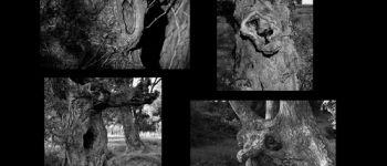 Exposition photos «Comment les histoires viennent au papier» de Caroline De Loor Plouguerneau