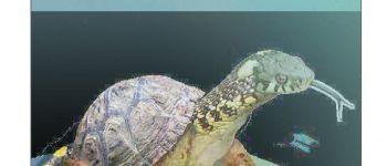 Reptiles et Amphibiens - Exposition Hillion