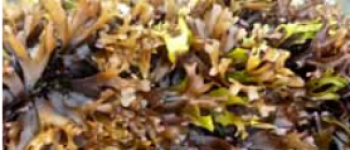 Week-end de conclusion du cycle algues Plozévet