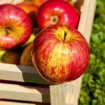 4ème Marché au pommes Landerneau