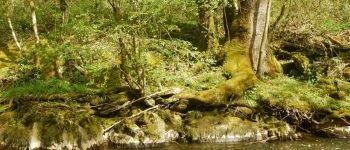 Balade nature La Chèze