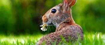 Balade de Pâques Peumerit-Quintin