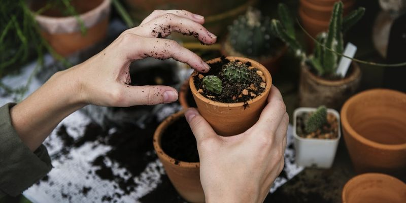 Fête des plantes Vue sur Vert