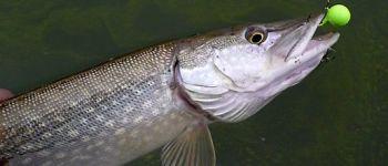 Initiation pêche aux leurres Jugon-les-Lacs - Commune nouvelle