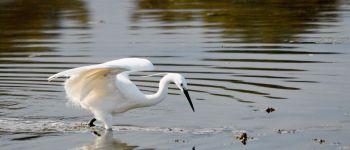 Animation observation des oiseaux de l'Estuaire Plourivo