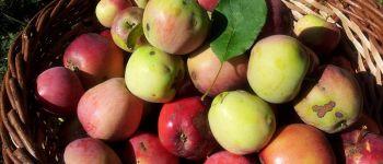 Animation sur l'identification des variétés locales de pommes Iffendic
