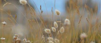 Balade art et nature Plobannalec-Lesconil