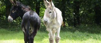 Aprés-midi en famille avec les ânes Brélès