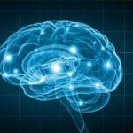 Conférence Espace des Sciences : Les maladies de la mémoire : comment ça marche ? Comment agir ? Morlaix