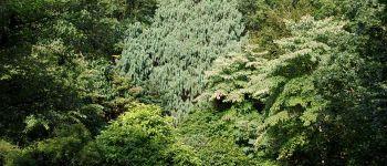 Visite guidée \Histoires d\arbres remarquables\ Brest