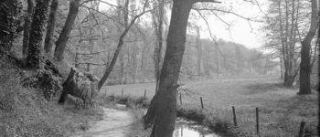 balade à la découverte de la faune et la flore des zones humides autour du Cens et des carrières de la côte d\or Nantes