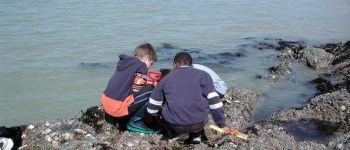 Animation découverte des animaux du bord de mer  Etables
