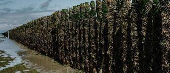La mytiliculture : l\élevage des moules Hillion