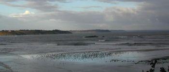 Animation nature: grèves et falaises de la baie Hillion
