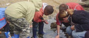 Sortie nature : sur les rochers à marée basse  Préfailles